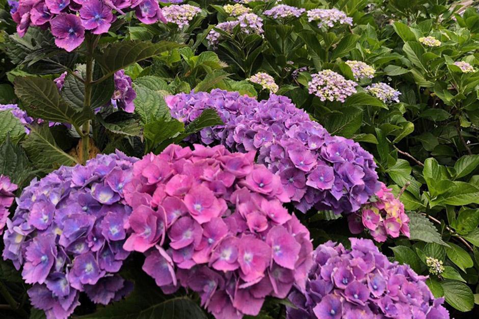 画像:ジャンボタクシーで夏も快適。美しい花紀行。